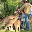 גן גורו - פארק אוסטרלי
