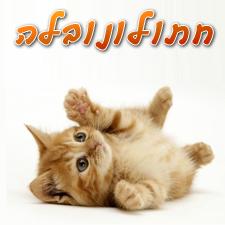 חתולונובלה