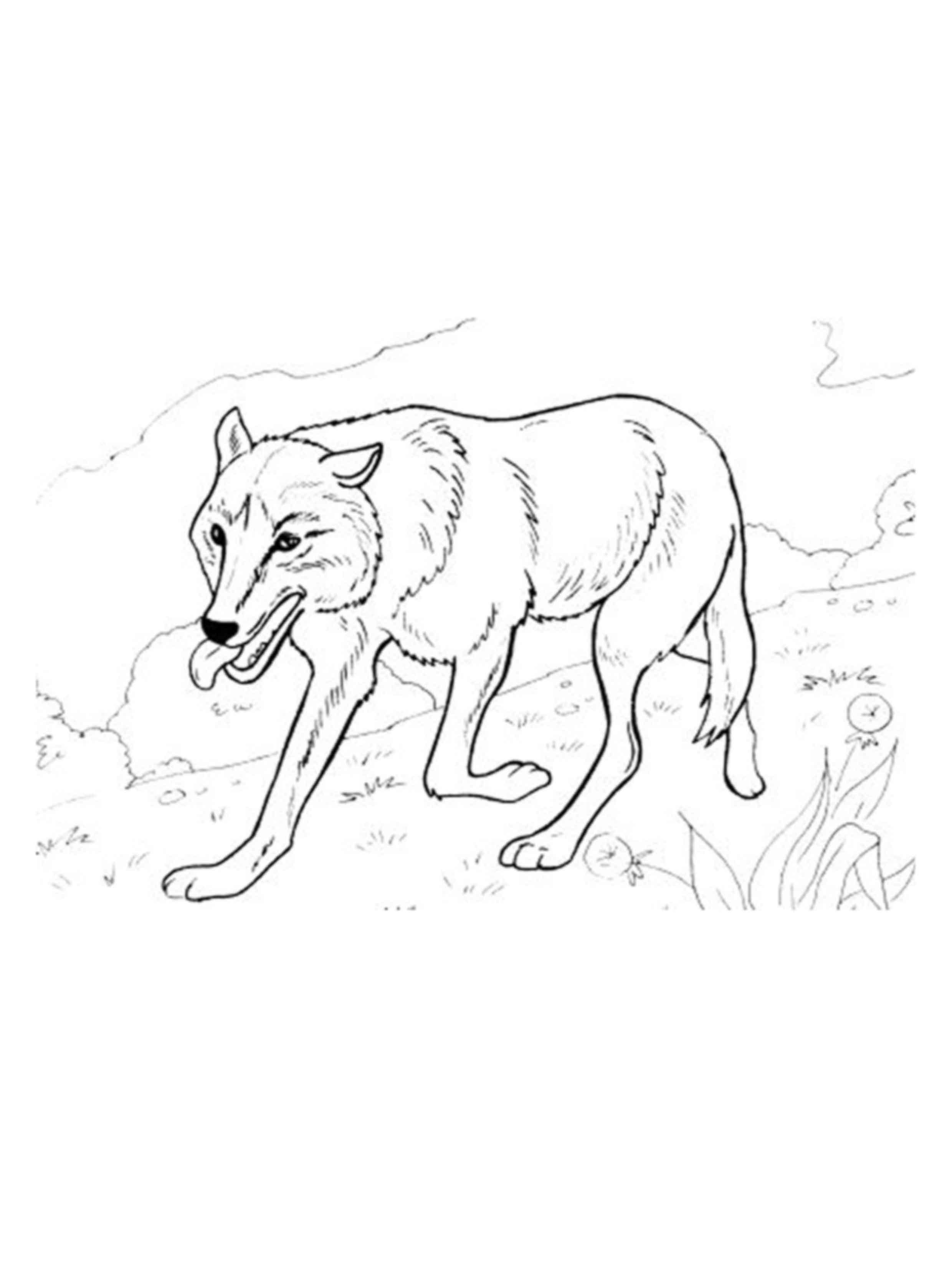 דף צביעה לילדים של זאב