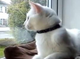 פרק 11 של חתולנובלה - בבר הגיבור