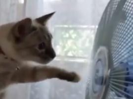 פרק 18 הקורע של חתולנובלה - חתולהרובוט