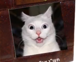 פרק 2 של חתולנובלה - מי רוצה להיות מהנדס תעשיה וניהול