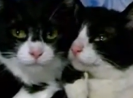 חתולנובלה חולה על בורקס בפרק 3