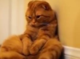 חתולונובלה פרק 5 - זיסו האגדה
