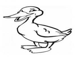 דף צביעה של ברווז